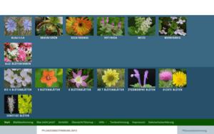 pflanzenbestimmung.info