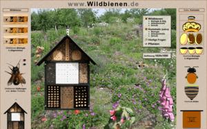 www.wildbienen.de
