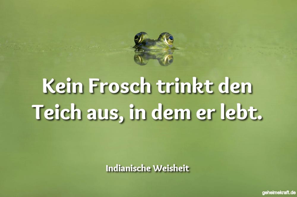 Kein Frosch trinkt den Teich aus, in dem er lebt.