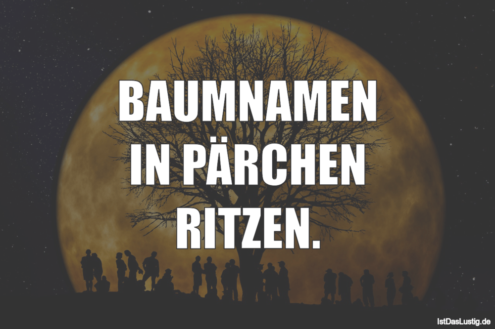 Lustiger BilderSpruch - BAUMNAMEN IN PÄRCHEN RITZEN.