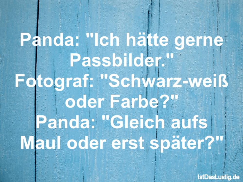 """Lustiger BilderSpruch - Panda: """"Ich hätte gerne Passbilder."""" Fotograf:..."""