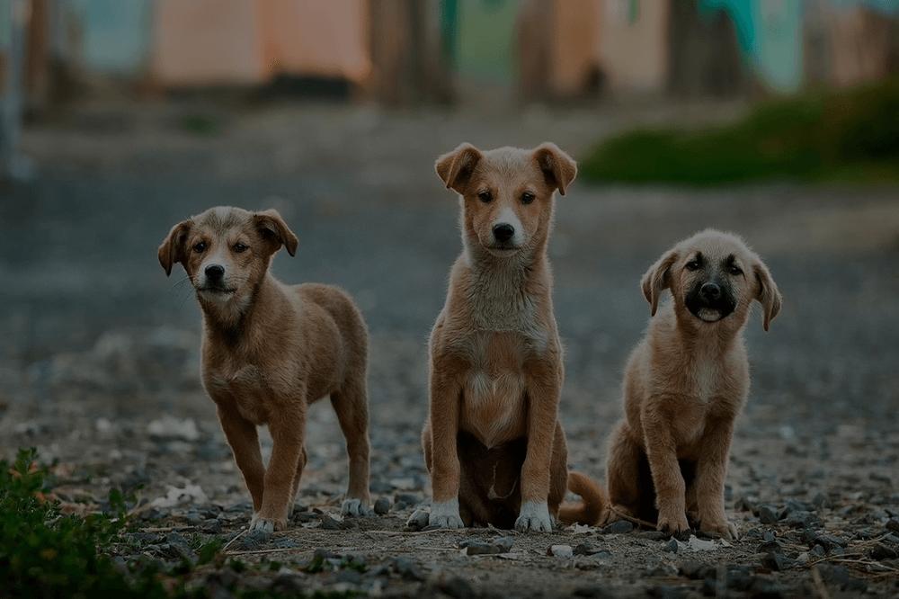 """Lustige Sprüche zum Thema """"Hund"""""""