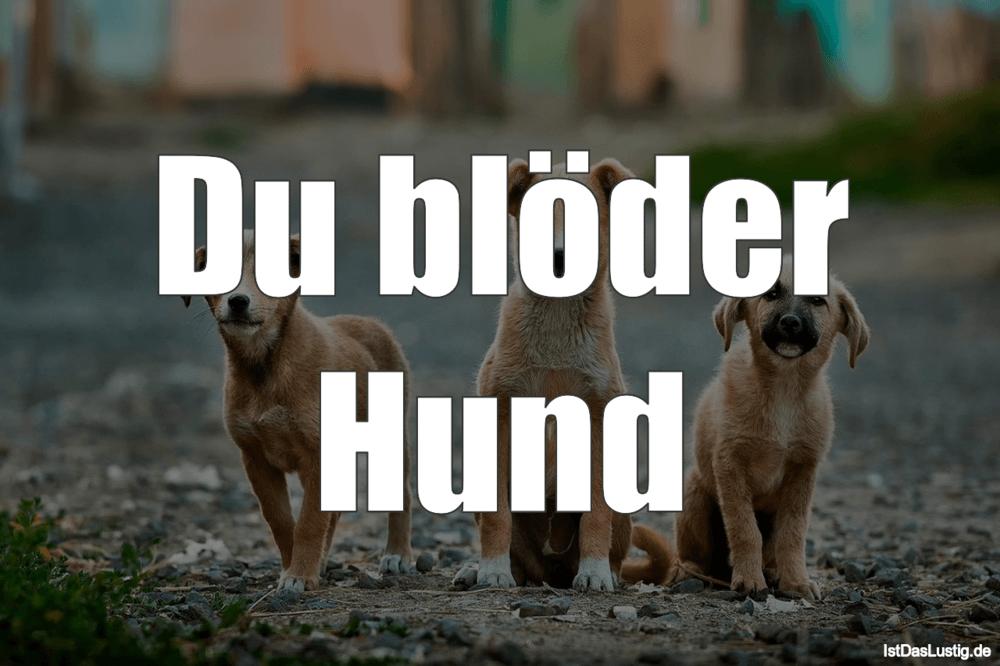 Lustiger BilderSpruch - Du blöder Hund