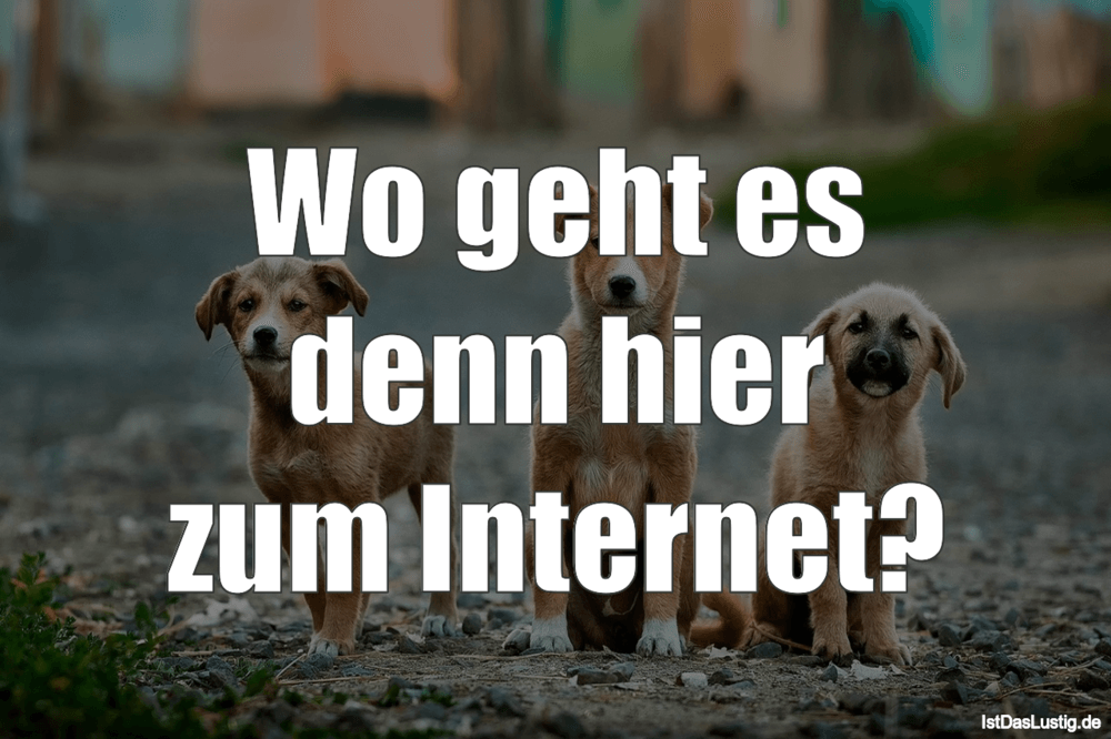 Lustiger BilderSpruch - Wo geht es denn hier zum Internet?
