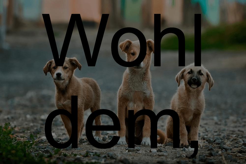 Hund gedichte mein ist tot Mein Hund