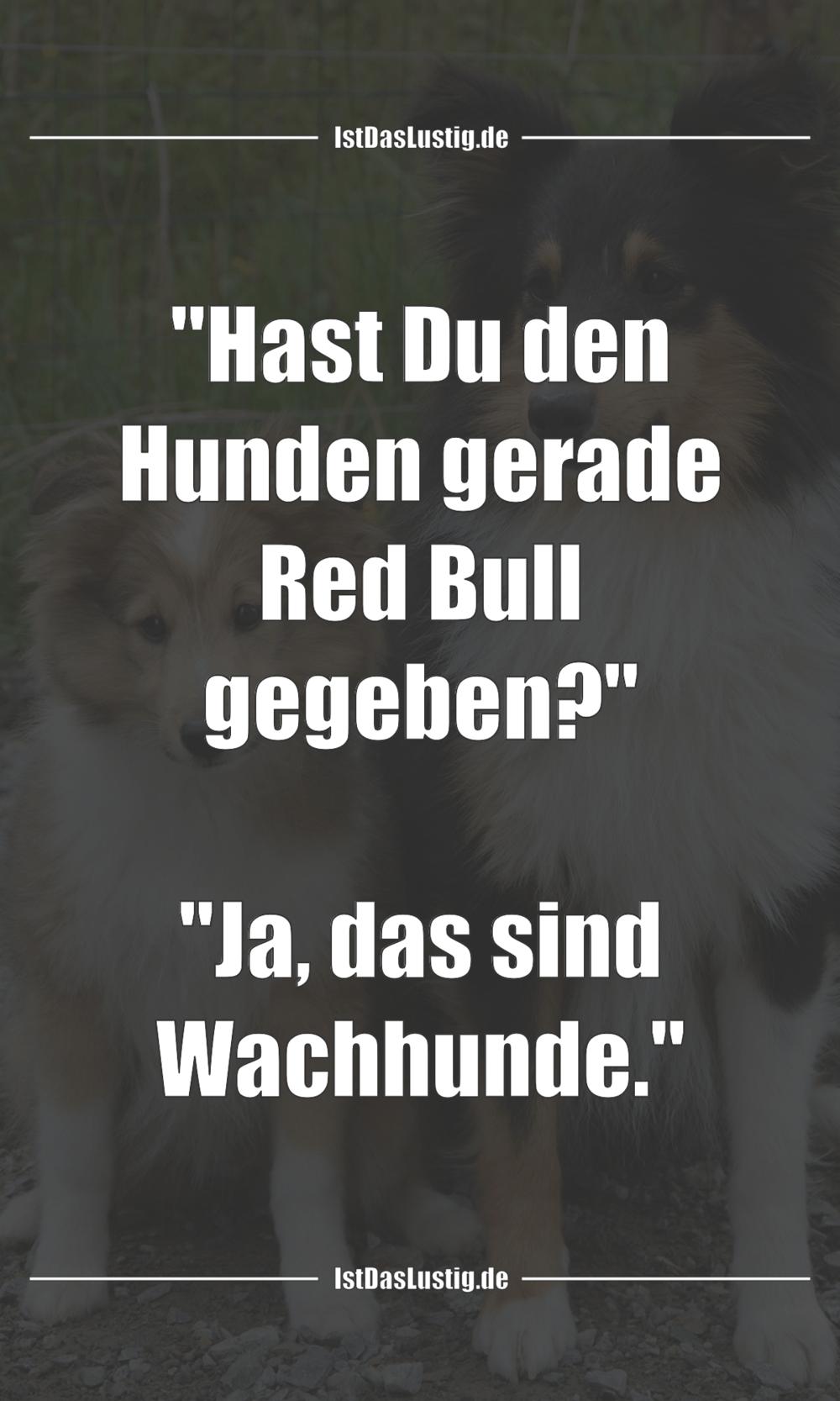 "Lustiger BilderSpruch - ""Hast Du den Hunden gerade Red Bull gegeben?""..."