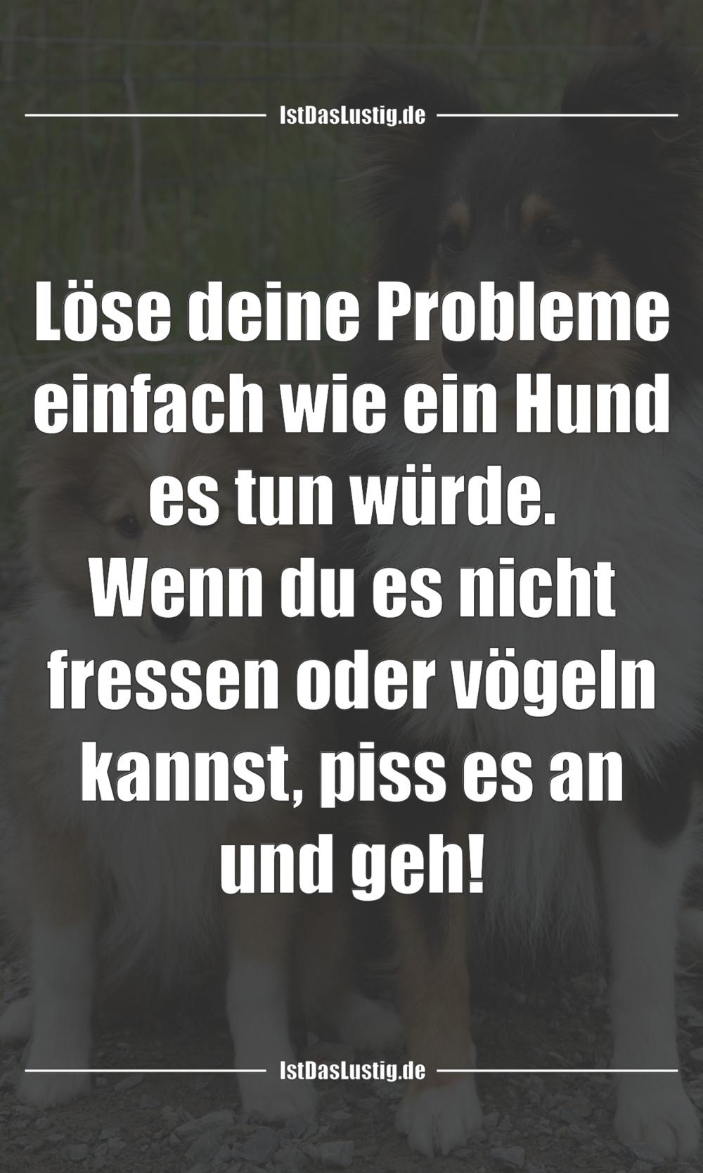 Lustiger BilderSpruch - Löse deine Probleme einfach wie ein Hund es tun...