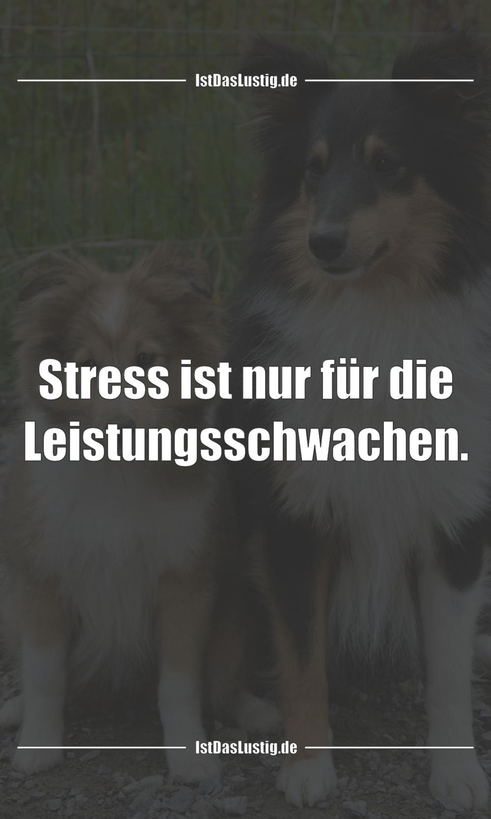 Lustiger BilderSpruch - Stress ist nur für die Leistungsschwachen.