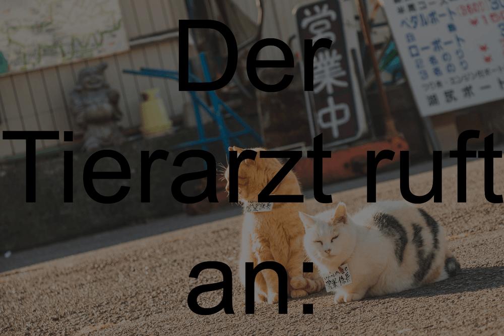 Katze geburtstagssprüche Die 20