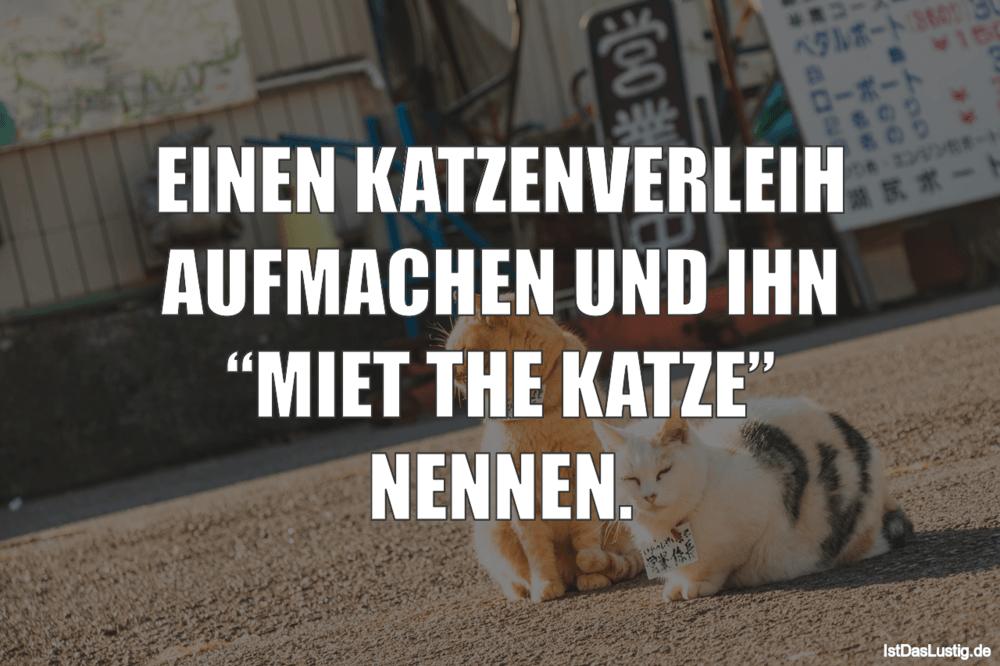 """Lustiger BilderSpruch - EINEN KATZENVERLEIH AUFMACHEN UND IHN """"MIET THE..."""