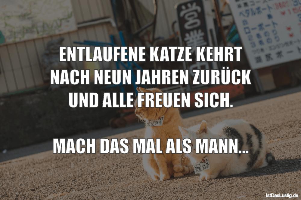 Lustiger BilderSpruch - ENTLAUFENE KATZE KEHRT NACH NEUN JAHREN ZURÜCK ...