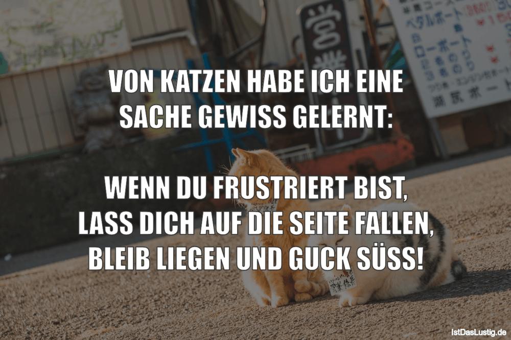 Lustiger BilderSpruch - VON KATZEN HABE ICH EINE SACHE GEWISS GELERNT:...