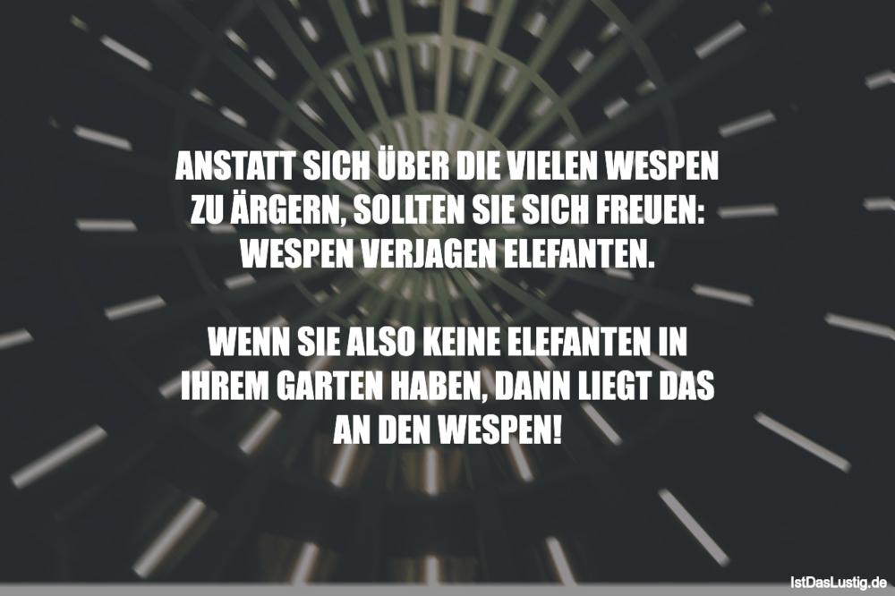 Lustiger BilderSpruch - ANSTATT SICH ÜBER DIE VIELEN WESPEN ZU ÄRGERN,...