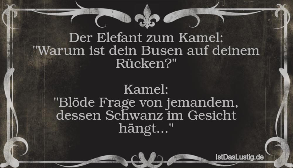 """Lustiger BilderSpruch - Der Elefant zum Kamel: """"Warum ist dein Busen au..."""