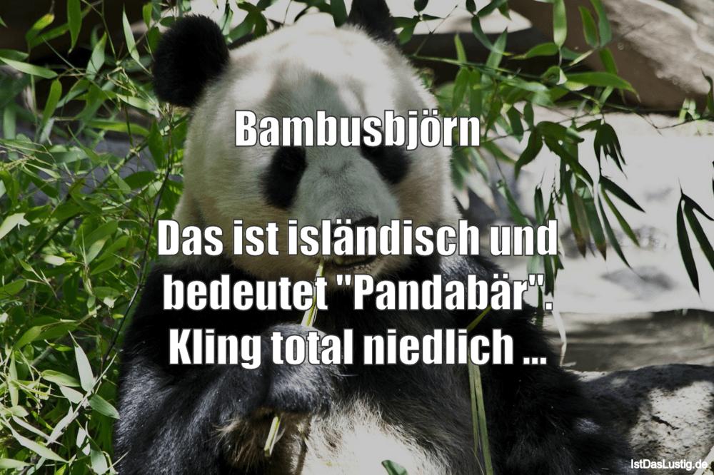 """Lustiger BilderSpruch - Bambusbjörn  Das ist isländisch und bedeutet """"P..."""