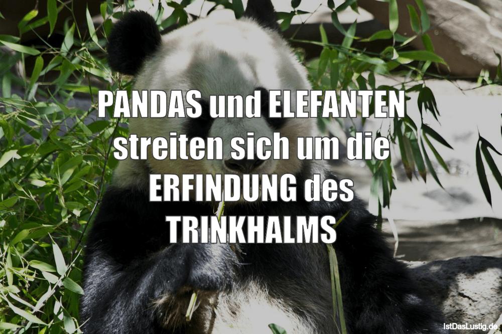 Lustiger BilderSpruch - PANDAS und ELEFANTEN streiten sich um die ERFIN...