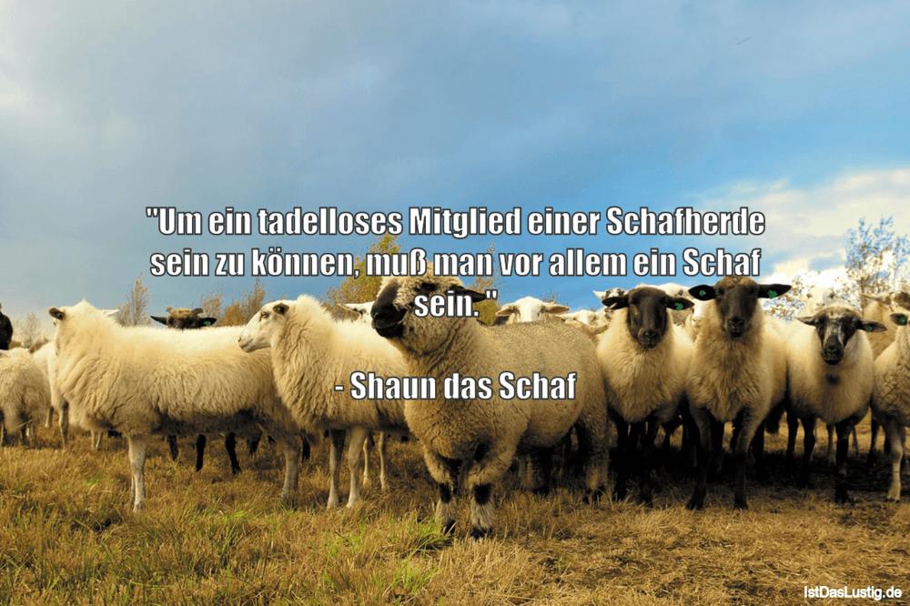 """Lustiger BilderSpruch - """"Um ein tadelloses Mitglied einer Schafherde..."""