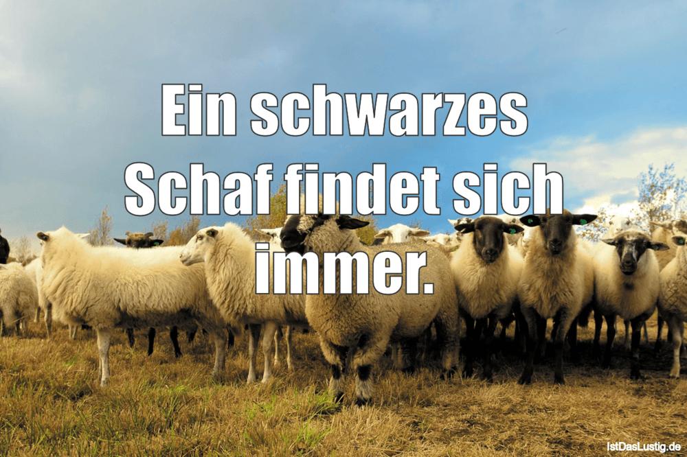 Lustiger BilderSpruch - Ein schwarzes Schaf findet sich immer.