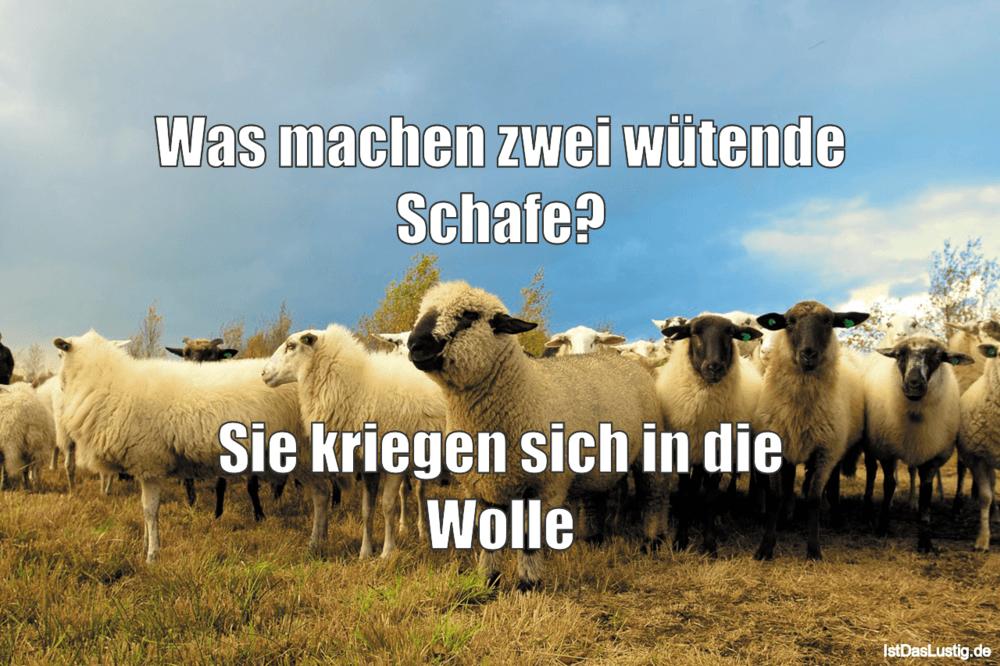 Lustiger BilderSpruch - Was machen zwei wütende Schafe?   Sie kriegen...
