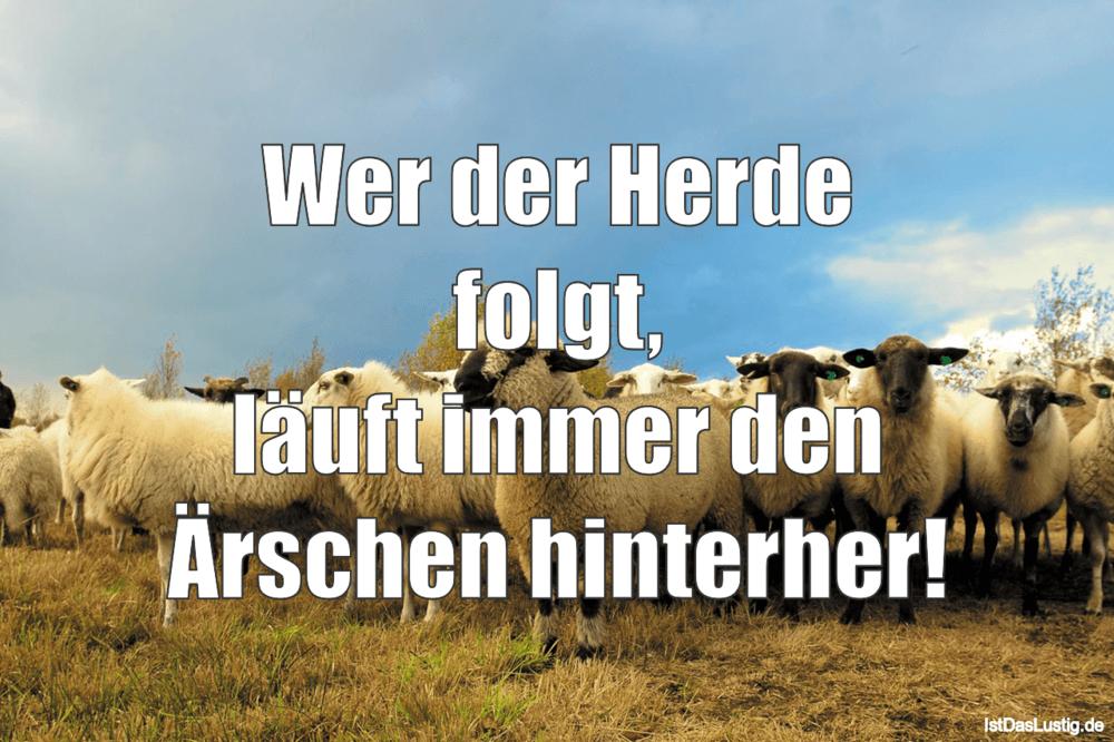 Lustiger BilderSpruch - Wer der Herde folgt, läuft immer den Ärschen hi...