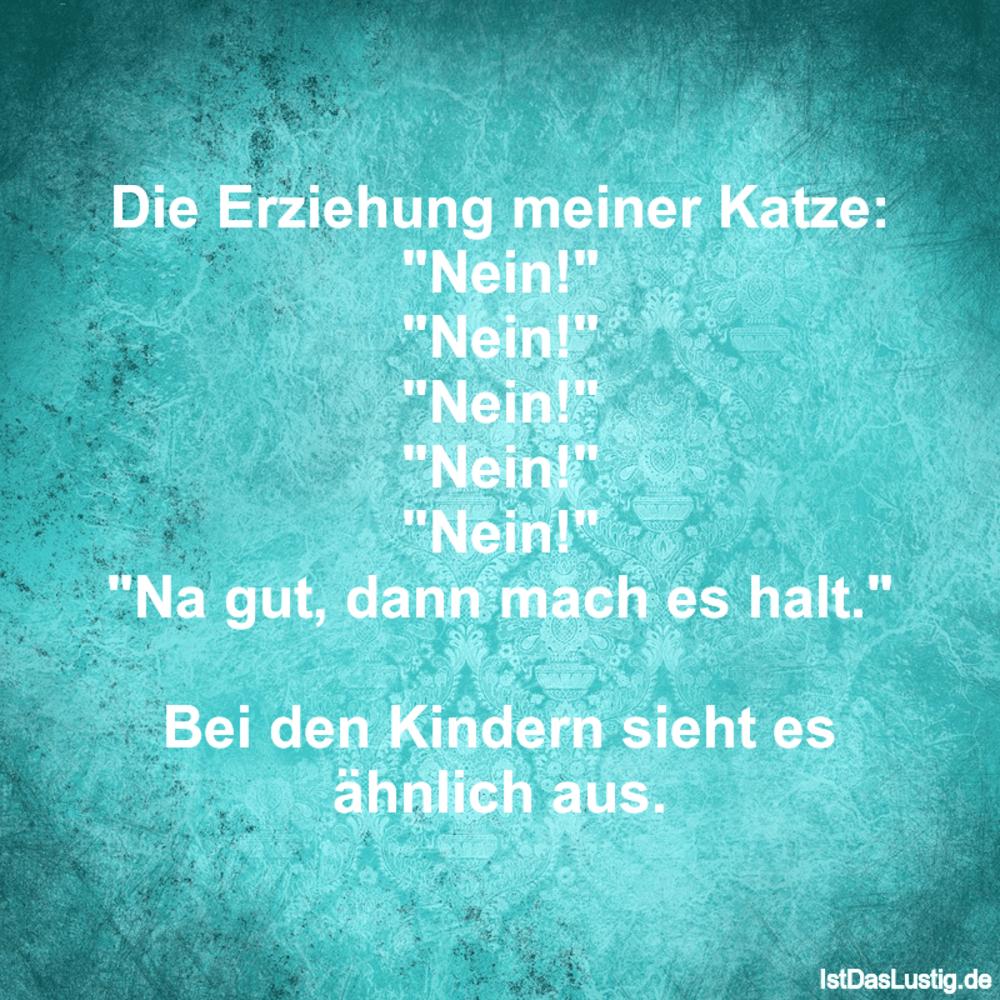 """Lustiger BilderSpruch - Die Erziehung meiner Katze: """"Nein!"""" """"Nein!""""..."""