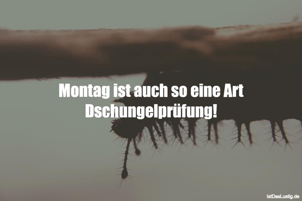 """Lustige Sprüche zum Thema """"Montag"""""""